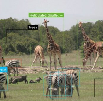 Giraffes and Zebras on Africa's grasslands