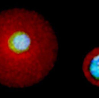 Single cell matrix