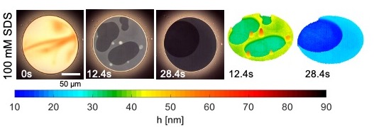 Micellar foam films show grayscale intensity variations that correspond to rich nanoscopic topography mapped using IDIOM protocols